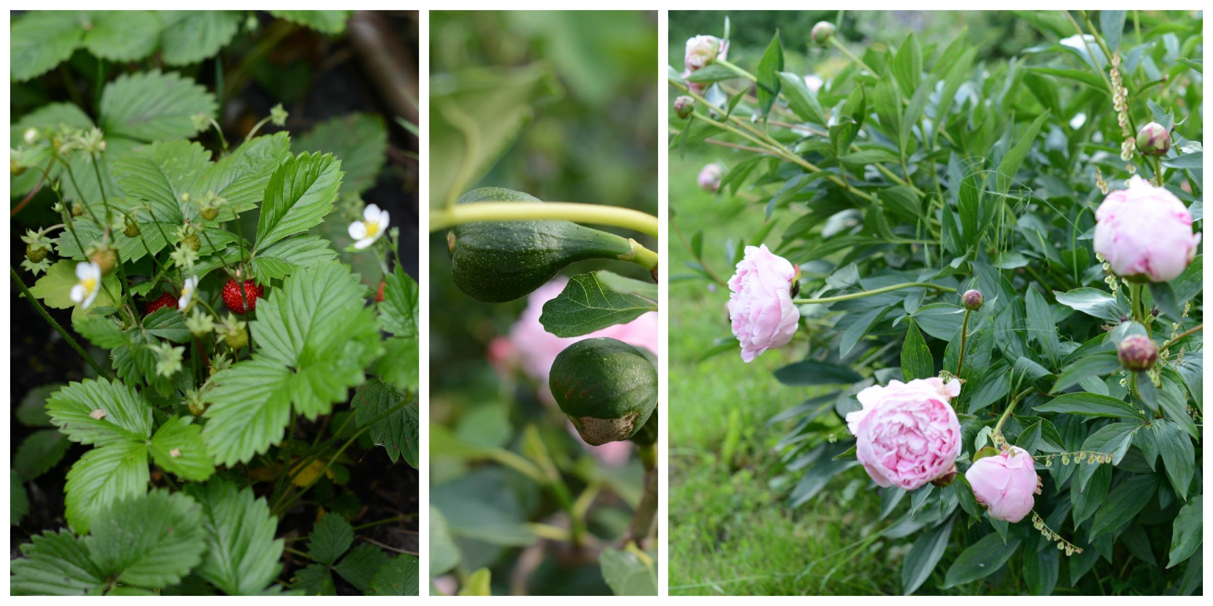 140526_Collage_Garten_2